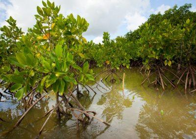 Mangroveskog på Bali. GRID-Arendal Lawrence Hislop