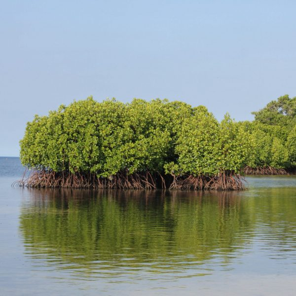 blue-forests-of-lembongan_39727304782_o